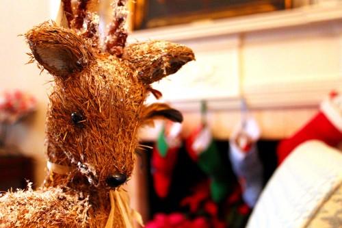 reindeer-holiday-callanwolde